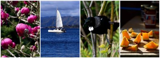 10 мифов про Новую Зеландию